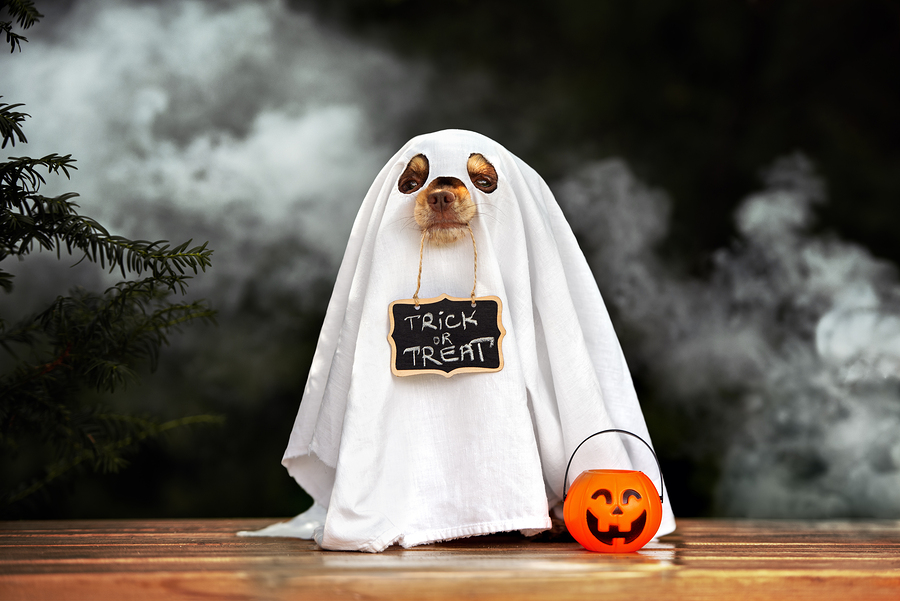 Furry, Four-legged Halloween Ghosts and...